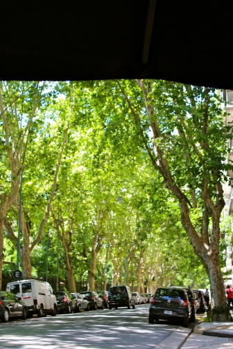 Tree canopies in Palermo
